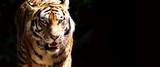 Fototapete Tierpark - Katze - Säugetiere