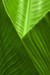 Leinwanddruck Bild Banana Leaf Cup