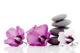 Fototapeta natura - naturalny - Kwiat