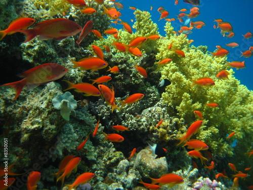 Fototapeta Korallenriff