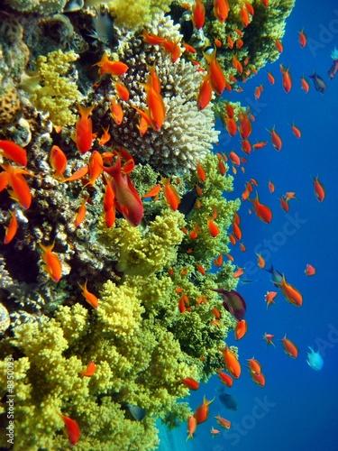 Fototapeta Korallenriff rotes Meer
