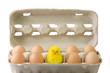 Leinwanddruck Bild Eier mit Kueken