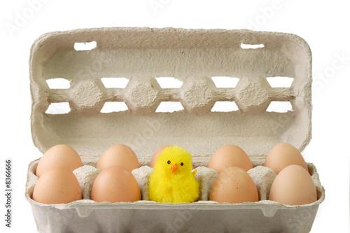 Leinwandbild Motiv Eier mit Kueken