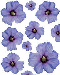 Papier Cadeau Hibiscus Mauve