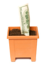 Dollars growing in the pot isolated on the white