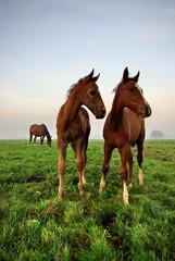 Foals Look Around The World