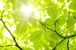 Leinwanddruck Bild - leaf