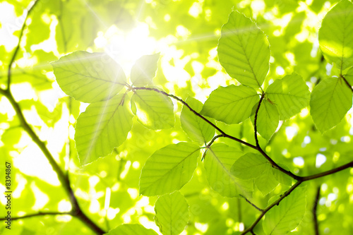 Leinwanddruck Bild leaf