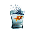 goldfish in the glass