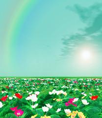 Spring scenery. Primroses. Rainbow