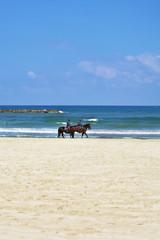 Horse patrol on a beach