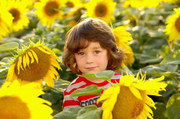 Kind zwischen Sonnenblumen lieb