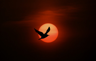 Bird and sun silhouette