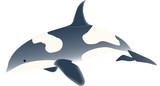 vector - sea fish  predator (orcinus orca) poster
