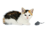 Kitty Cat With Mouse Toy poster