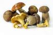 Edible Mushrooms1