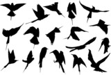 silhouette collection of European Bee-eater poster