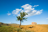 lonely tree, old far and white cloud poster