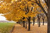 Autumn Colors at Les Invalides Paris poster