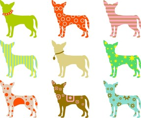 patterned chihuahuas