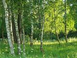 birch grove poster