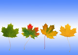 Autumn Leaf Progression poster