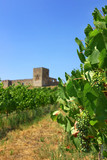 Landscape with grapevines and an old castle.