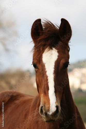 Leinwanddruck Bild tête de cheval