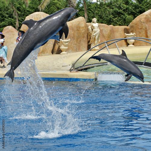 Deurstickers Dolfijn saut de dauphins