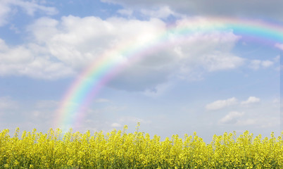 rainbow over landscape with yellow flowers