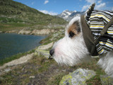 hund am bergsee
