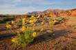 Desert landscape, Brandberg, Namibia