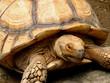 Big Tortoise at Manila Zoo