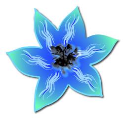 Clématite bleue