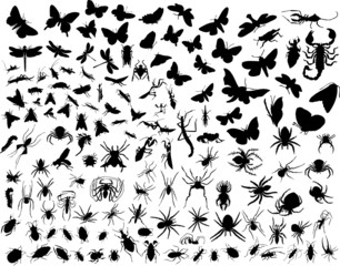 biggest collection of vector insects