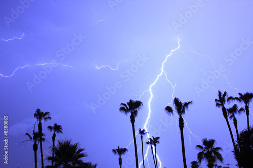 Palm Tres and Tropical Lightning Thunderstorm