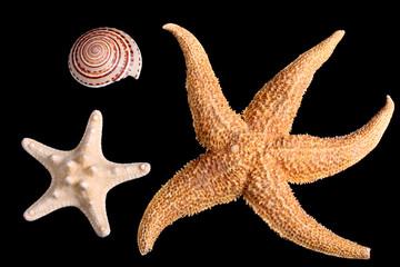 Starfishes and seashell