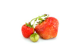 One green, unripe and pair of ripe red strawberries poster