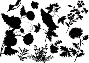 black flowers silhouettes