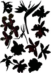 set of orchid silhouettes