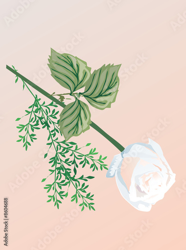 illustration with white rose