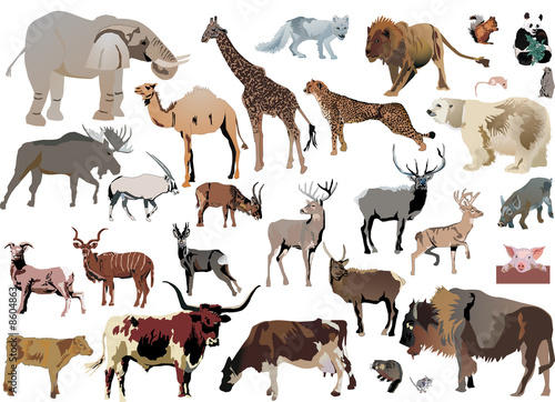 color animals set