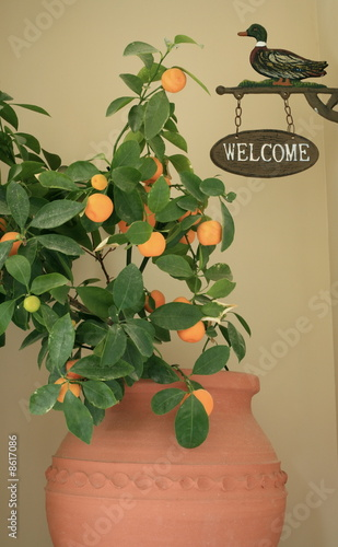 Potted plant and welcome sign
