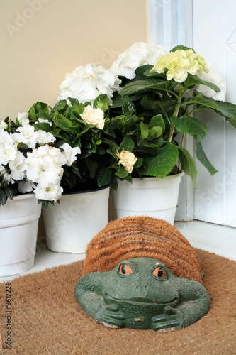 Plants with decorative frog
