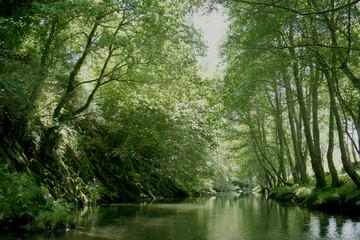 Rio verde na floresta virgem