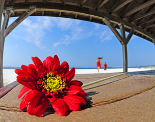 Pretty flower in beach shelter