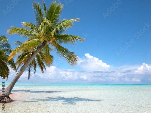 Fotobehang Centraal-Amerika Landen Bahamas cocotier sur plage Iles Turkoises