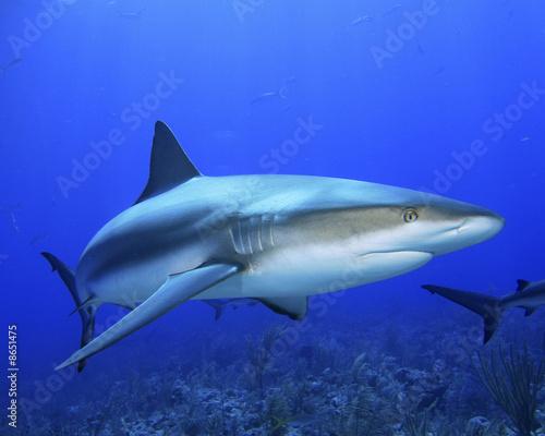 Fototapete Haie - Meer - Fische