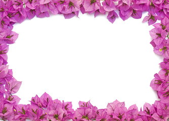 Pink flowers frame