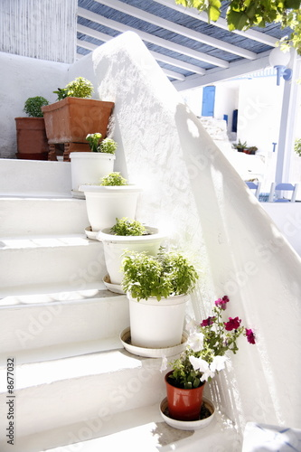 Plants on whitewashed steps